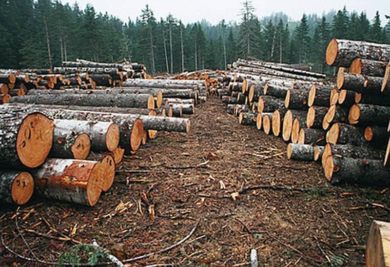 Экспорт лесоматериалов вырос на 6