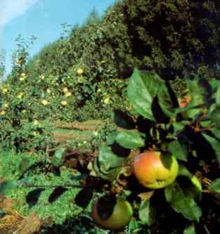 Открывается сезон заготовки плодово ягодной продукции
