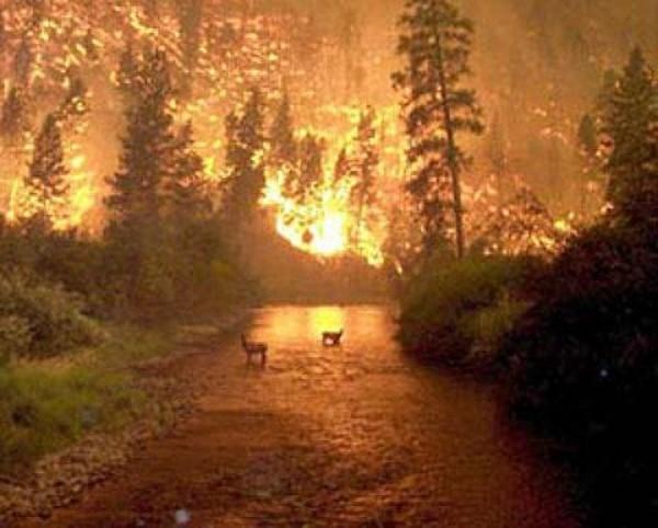 Люди пострадавшие от пожаров могут найти приют в Кузбассе